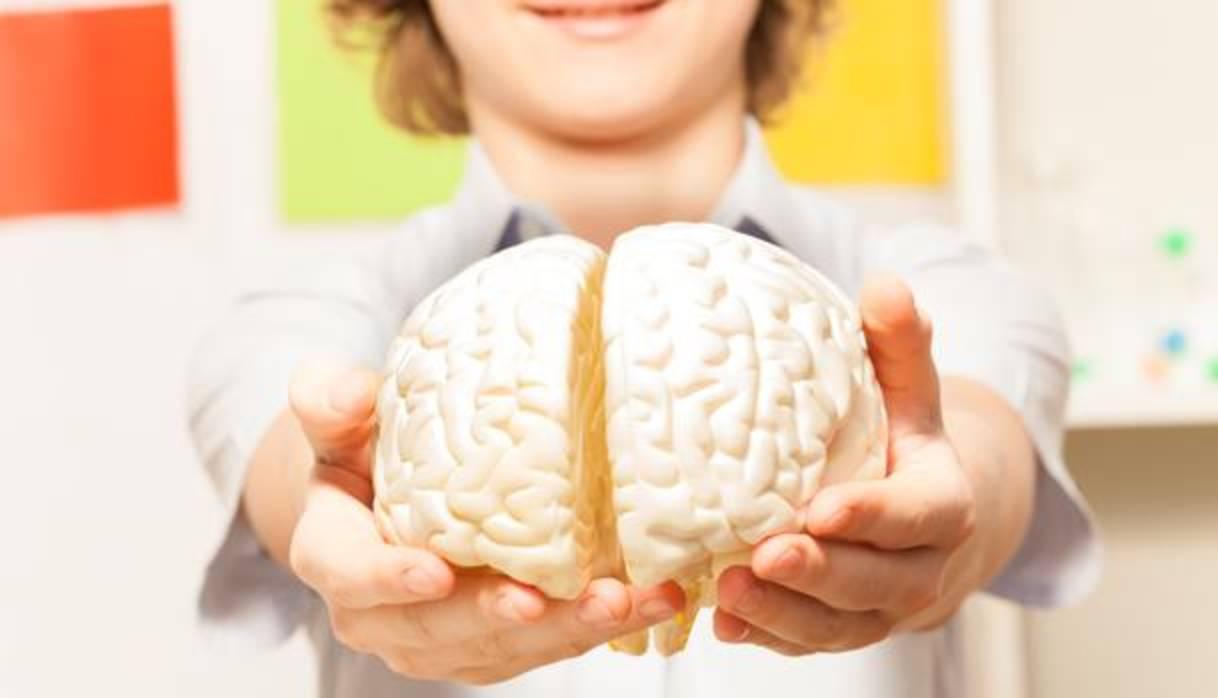 Cerebro adolescentes